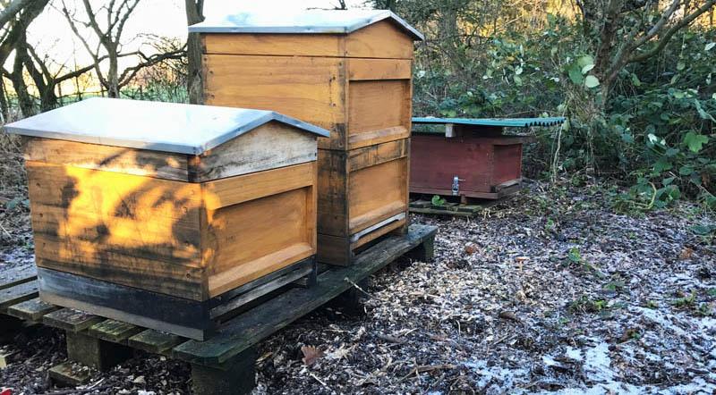 Winterruhe bei den Bienen