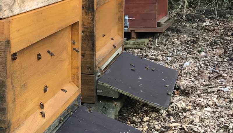 Erste Bewegung vor den Bienenkästen am 15. Februar