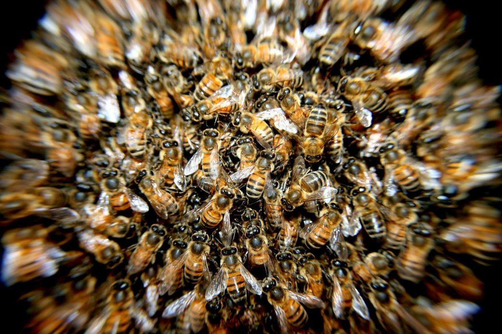 Bienen auf einem Haufen