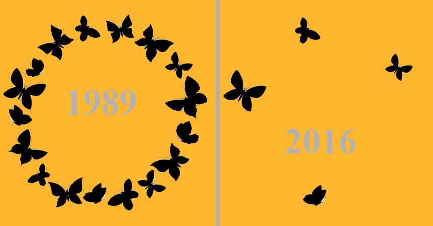 Wo sind sie geblieben? Insekten 1989-2016