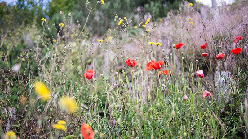 Blühfläche für Insekten – Stephanie Krist/unsplash