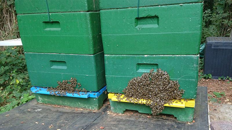 Auch die Bienen von Claudia Rühmkorf haben die Hitze satt