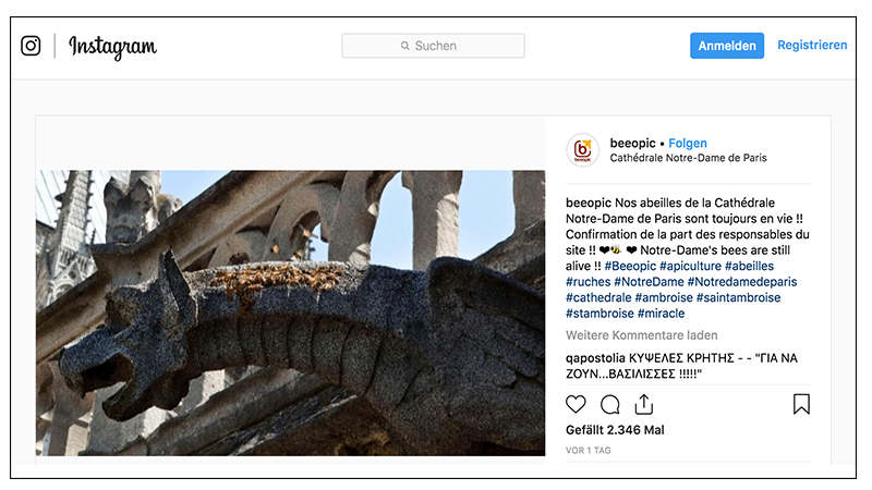Die Bienen von Notre-Dame haben den Brand überstanden – hier die Nachricht auf Instagram