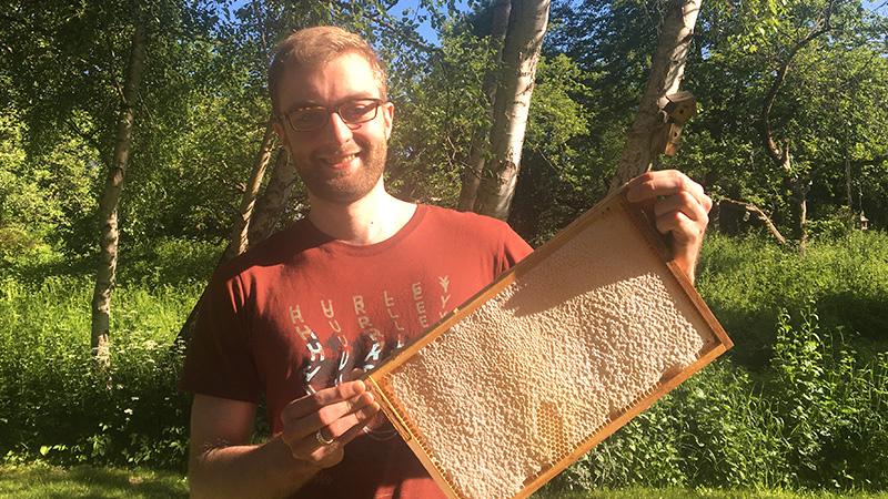 Eine solche verdeckelte Wabe verheißt guten Honig