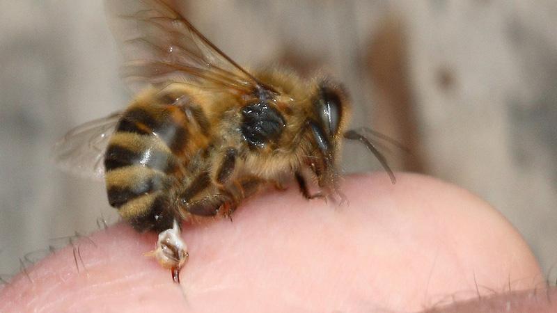 Sich einer Biene