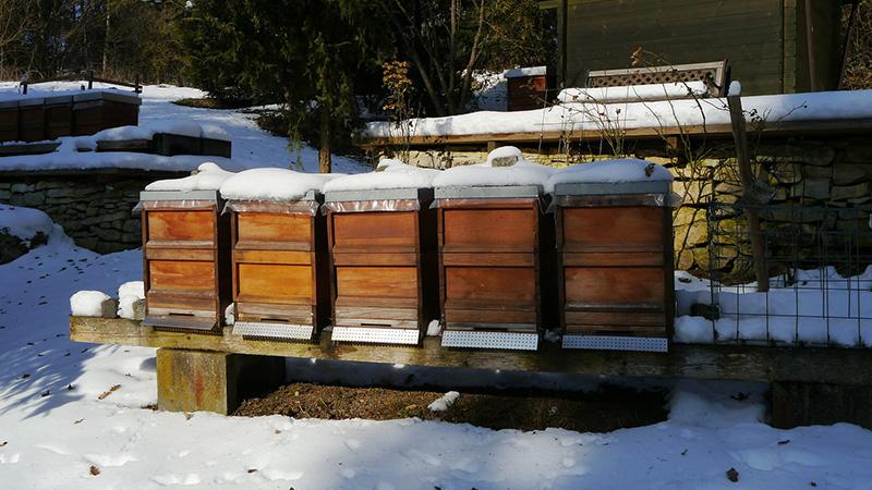 Die Oxalsäure muss im Winter aufgebracht werden. Nur, wenn es keine verdeckelte Brut gibt, kann die Säure alle Varroamilben erreichen. Foto: Fritz Weichsel / Pixabay